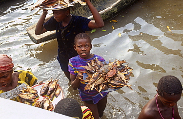 Villagers selling smoked fish and crabs, Sherbro island, Sierra Leone, 2004-2005  -  Steve O. Taylor/ npl