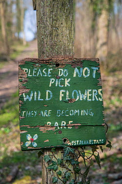 Do Not Pick Wild Flowers' sign, Sussex, England, March 2014  -  Adrian Davies/ npl