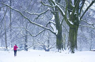 Runner in the snow, South Meadow, Hampstead Heath, London, UK, January 2013  -  Matthew Maran/ npl