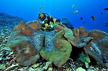 Diver behind Giant clams (Tridacna gigas) Manado, Indonesia Sulawesi Sea May 2010  -  Pascal Kobeh/ npl