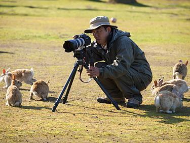 Photographer Yukihiro Fukuda, crouching by tripod surrounded by rabbits, Okunoshima Rabbit Island, Takehara, Hiroshima, Japan  -  Yukihiro Fukuda/ npl