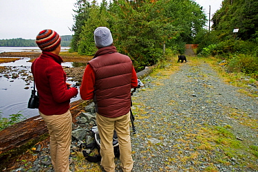 Photographers watching Black bears (Ursus americanus) at Thorton Creek, Barkley Sound, Vancouver Island, Canada  -  Matthew Maran/ npl
