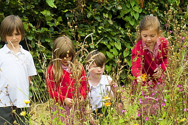 Group of Primary school children looking at native wild flowers including Red Campion (Silene dioica) planted in school garden to attract bees Part of the Friends of the Earth national Bee Friendly ca...  -  David Woodfall/ npl