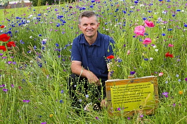 Steve Caddy, operations manager of Greenspace, with wildflowers planted to attract bees as part of the Friends of the Earth Bee Friendly project carried out with the Bron Afon Community Housing Associ...  -  David Woodfall/ npl