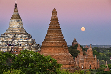 Temples of Bagan with the moon at dawn, Myanmar, November 2011  -  David Noton/ npl