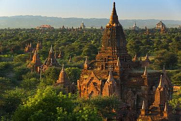 Landscape of the Temples of Bagan, Myanmar, November 2013  -  David Noton/ npl