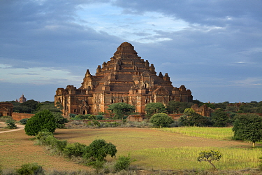 Dhammayangyi Temple, Temples of Bagan, Myanmar, November 2012  -  David Noton/ npl