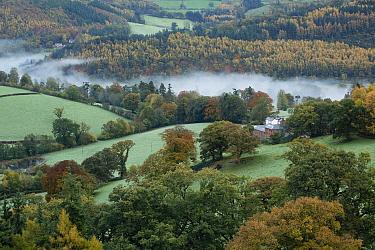Autumn mist in Dee Valley (Dyffryn Dyfrdwy) near Llangollen, Denbighshire, Wales, UK, November 2013  -  David Noton/ npl