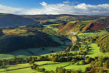 Rural landscape with fields of sheep and small village, Dee Valley (Dyffryn Dyfrdwy) near Llangollen, Denbighshire, Wales, UK, November 2013  -  David Noton/ npl