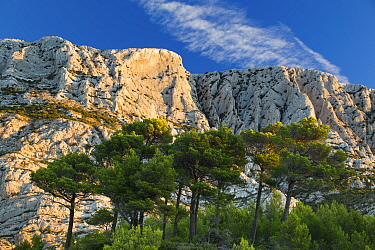 Montagne Sainte-Victoire at dawn, Var, Provence, France, October 2012  -  David Noton/ npl