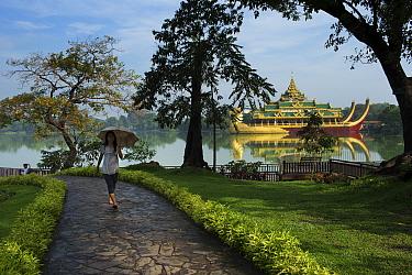 Woman walking along path with parasol, with Karaweik Palace in the background, Kandawgyi Lake, Yangon, Myanmar, November 2012  -  David Noton/ npl