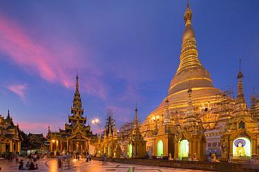 Shwedagon Pagoda illuminated at dusk, Yangon, Myanmar November 2012  -  David Noton/ npl