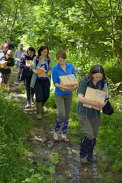 Wildlife trust staff and volunteers carrying nest boxes containing pairs of Hazel dormice (Muscardinus avellanarius) and empty boxes into the woods to place them inside soft release cages attached to...  -  Nick Upton/ npl