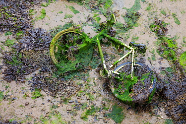 Discarded bicycle covered in algae in harbour at low tide Portsmouth, UK, July 2013  -  Alex Hyde/ npl