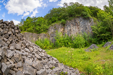 Disused limestone quarry that has been recolonised by a variety of grassland and tree species Peak District National Park, Derbyshire, UK August  -  Alex Hyde/ npl
