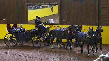 Marbach staff in traditional uniform driving four Wurttemberg stallions during the studs 500th anniversary celebrations Marbach National Stud, Swabian Alps, near Reutlingen, in Baden-Wurttemberg, Germ...  -  Kristel Richard/ npl
