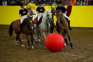 The German national team and the Marbach team play equestrian football during the studs 500th anniversary celebrations Marbach National Stud, Swabian Alps, near Reutlingen, in Baden-Wurttemberg, Germa...  -  Kristel Richard/ npl