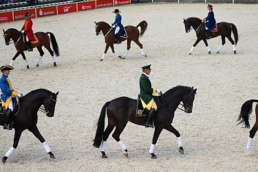 Marbachs Quadrille in traditional uniform, mounted on Wurttemberg horses, performing during the studs 500th anniversary celebrations Marbach National Stud, Swabian Alps, near Reutlingen, in Baden-Wurt...  -  Kristel Richard/ npl