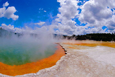 Champagne pool, carbon dioxide bubbles in mineral hot spring, Taupo volcanic zone, Rotorua, New Zealand  -  Steven David Miller/ npl