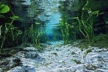 Alexander springs, Ocala NF, Florida 80m gallons water from artesian spring flow daily into Alexander creek  -  Steven David Miller/ npl
