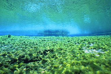80m gallons water from artesian spring flow daily into Alexander Springs, Ocala NF, Florida, USA  -  Steven David Miller/ npl