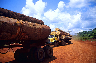 Tropical rainforest timber transported on logging trucks to the local seaport Drivers are paid per trip and therefore have an incentive to ignore traffic and safety rules  -  Karl Ammann/ npl