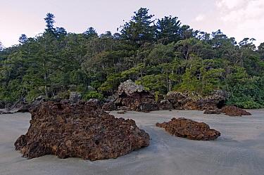 Volcanic rhyolite rock with subtropical rainforest in background, Casuarina Bay, Cape Hillsborough National Park, Queensland, Australia  -  Steven David Miller/ npl