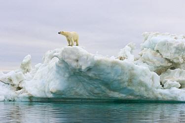 Polar bear (Ursus maritimus) standing on top of an iceberg floating in the Beaufort Sea, Arctic Ocean, Alaska  -  Steven Kazlowski/ npl