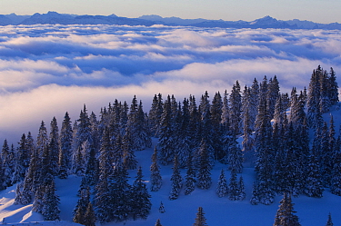 Sea of clouds over the Jura mountains, Switzerland, January 2009  -  Laurent Geslin/ npl