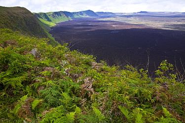 View from the caldera rim of the Chico Volcano, Sierra Negra, Isabela Island, Galapagos, January 2009  -  Juan Carlos Munoz/ npl