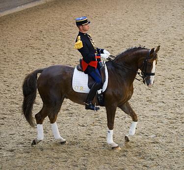 Solo Dressage of the Garde R?publicaine (Republican Guard), part of the French Gendarmerie, mounted on Selle Fran?ais horse at the Caserne des C?lestins, Paris, France October 2009  -  Kristel Richard/ npl