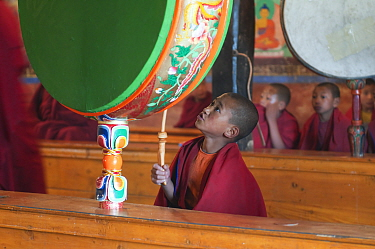 Young buddhist monk beating the drum during morning pudja, Thikse Gompa, Monastery, Ladakh, India  -  Bernard Castelein/ npl