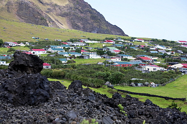 Houses in Edinburgh of the Seven Seas, the main settlement on Tristan da Cunha with solidified lava in the foreground South Atlantic Islands, March 2007  -  Troels Jacobsen/ npl