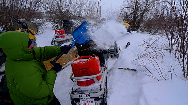 Getting snow off snowmobiles after successful filming of Timber wolves hunting bison, Arctic circle in northern Canada Taken on location for BBC Frozen Planet series, 2009  -  Chadden Hunter/ npl