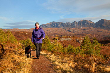 Man walking with dog along footpath through young Scots pine trees, Little Assynt Estate, near Lochinver, Assynt, Sutherland, NW Scotland, UK, January 2011, Model released  -  Mark Hamblin/ 2020V/ npl