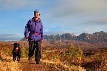 Man walking with dog along footpath through young Scots pine trees, Little Assynt Estate, near Lochinver, Assynt, Sutherland, NW Scotland, UK, January 2011, Model released 2020VISION Exhibition 2020VI...  -  Mark Hamblin/ 2020V/ npl