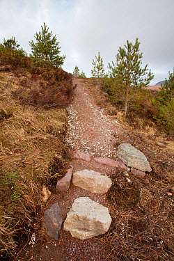 Newly laid footpath, Little Assynt Estate, near Lochinver, Assynt, Sutherland, NW Scotland, UK, January 2011  -  Mark Hamblin/ 2020V/ npl