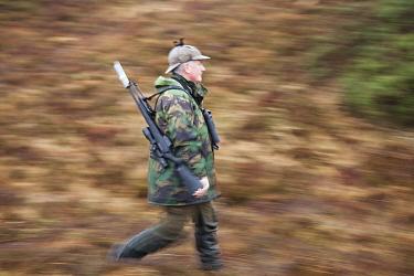 Deer stalker walking, carrying gun, Assynt Foundation, Glencansip Estate, Assynt, Sutherland, Scotland, UK, January 2011 Model released  -  Mark Hamblin/ 2020V/ npl
