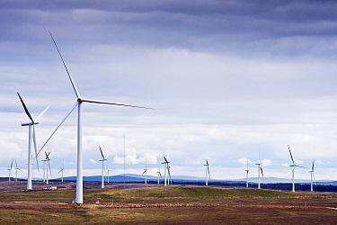 Wind turbines on Whitelee Windfarm, Glasgow, Scotland, August 2011  -  Merryn Thomas/ npl