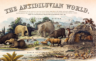 A rare British informational broadsheet illustration with contemporary hand colouring, drawn and engraved by John Emslie and published by James Reynolds in 1849 It shows reconstructions of extinct cre...  -  Paul D Stewart/ npl
