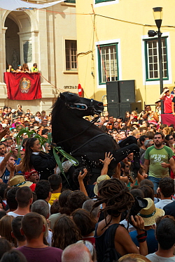 Lady riding a black Menorquin stallion, performing the bot or walking courbette of the Doma Menorquina, during the festival Mare de Deu de Gracia, in Mahon, Menorca, Spain 2012 People try to touch the...  -  Kristel Richard/ npl