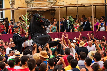Man riding a black Menorquin stallion, performing the bot or walking courbette of the Doma Menorquina, during the festival Mare de Deu de Gracia, in Mahon, Menorca, Spain 2012 People try to touch the...  -  Kristel Richard/ npl
