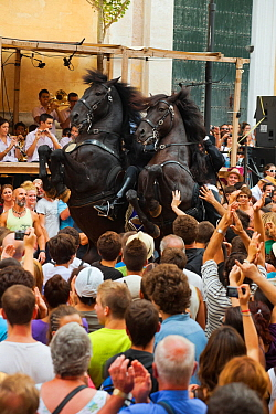 Men riding black Menorquin stallions, performing the bot or walking courbette of the Doma Menorquina, during the festival Mare de Deu de Gracia, in Mahon, Menorca, Spain 2012 People try to touch the h...  -  Kristel Richard/ npl