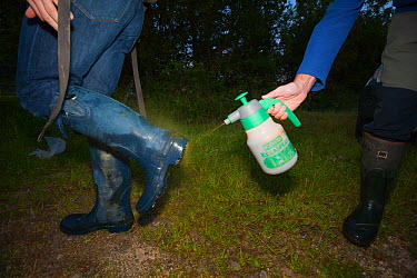 As part of biosecurity measures, Defra Field Workers sterilise their boots during European Badger (Meles meles) bovine tuberculosis vaccination trials in Gloucestershire, UK June 2011  -  Neil Aldridge/ npl