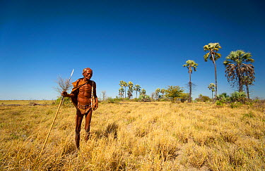 An elderly Zu, 'hoasi Bushman carrying a spear, bow and quiver of arrows on the plains of the Kalahari, Botswana April 2012  -  Neil Aldridge/ npl
