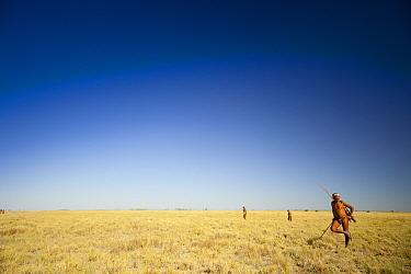 Zu, 'hoasi Bushman hunters on the open grasslands of the Kalahari, Botswana April 2012 No release available  -  Neil Aldridge/ npl
