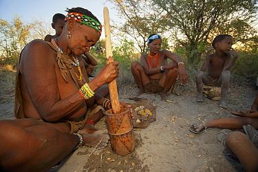 Zu, 'hoasi Bushman women preparing food using a wooden pestle and mortar in the Kalahari, Botswana April 2012  -  Neil Aldridge/ npl