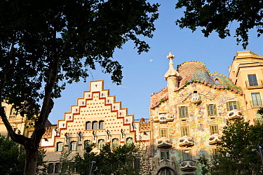 Two modernist buildings : left, Casa Amatller by architect Puig i Cadafalch and Casa Batll on the right by architect Antoni Gaudi, with tree in the foreground, Eixample District, Barcelona City, Spain...  -  Juan Manuel Borrero/ npl
