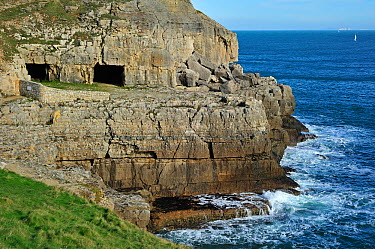 Tilly Whim quarry and caves at Anvil Point, Durlston Head on the Isle of Purbeck along the Jurassic Coast in Dorset, UK, November 2012  -  Philippe Clement/ npl