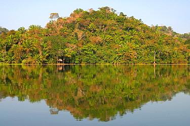 Forest along the Rio Chagres Soberania National park, Panama  -  Ben Lascelles/ npl